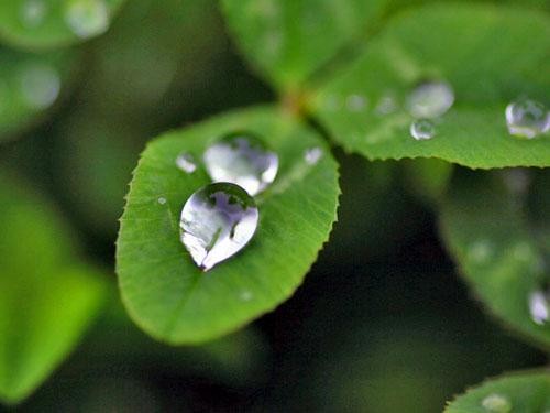 葉っぱの水滴