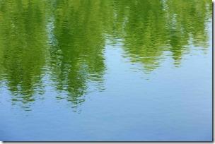 湖に映った木立