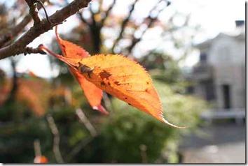 木の枝の枯れ葉