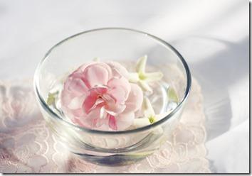 水に浸かったピンクの花