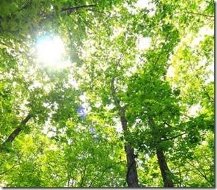 木立ちの間を通り抜ける太陽光