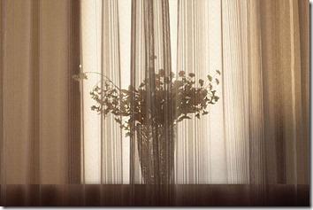 カーテンごしに見える出窓の花