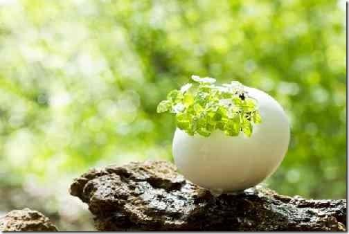 卵の中の植木