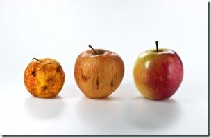 リンゴ幹細胞