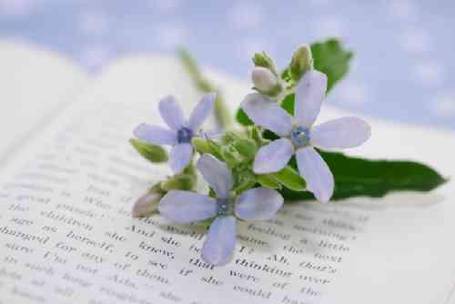 書籍にのった藤色の花