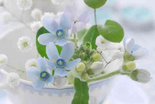 青いと白の小花