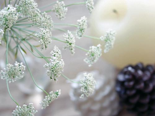 白い花と白い松ぼっくり