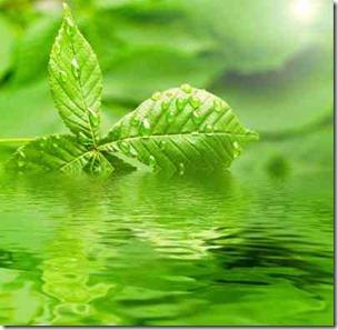 澄んだ水に浮かぶ木の葉