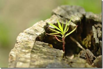 木から出てきた芽