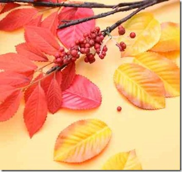 紅葉した木の葉と実