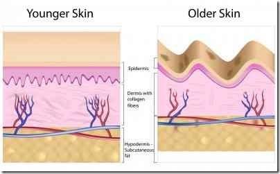 若い肌と年齢肌