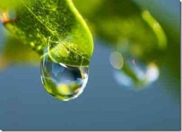 葉からおちる滴