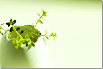 白い花器に入れ枯れた草