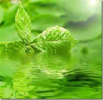 水に浮かぶ木の葉