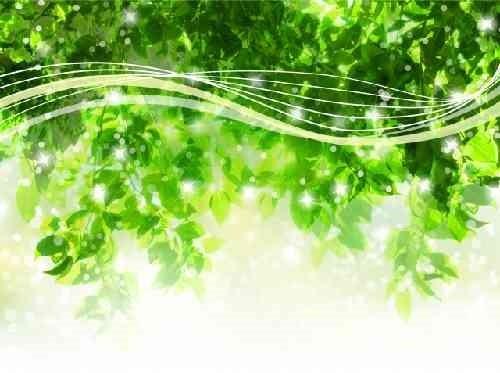 木の枝と光の流れ