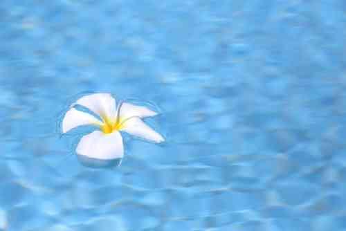 水の中の花