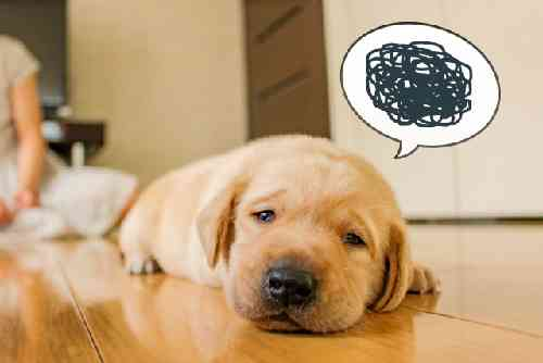 失敗を後悔している犬